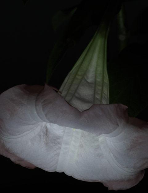 071016-B2.jpg